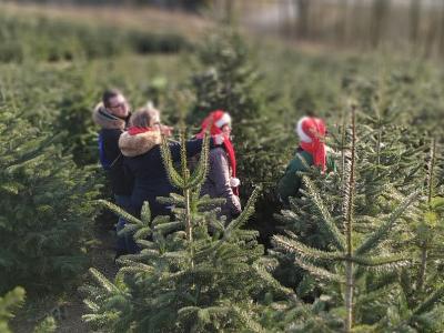 Weihnachtsbaum Selber Schlagen Sauerland.Norbert Wiese Gmbh Einfach Spitze